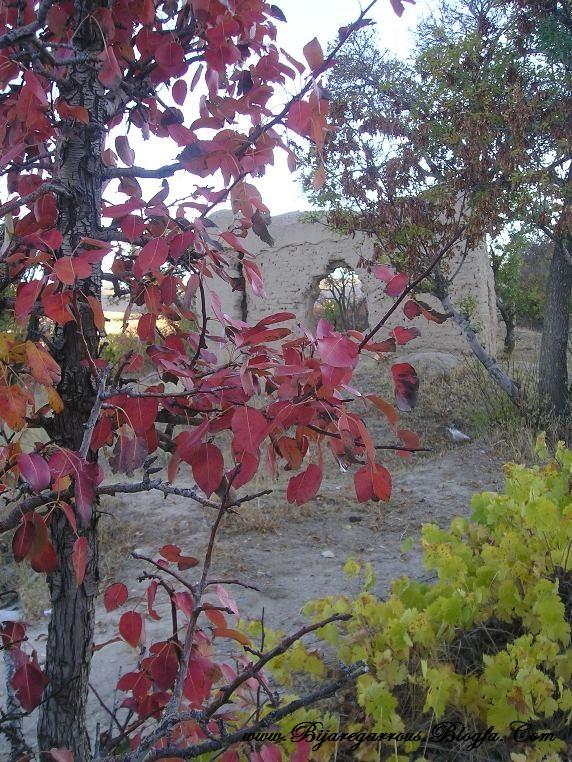 پاییز در بیجار - عکس از وبلاگ بیجار گروس
