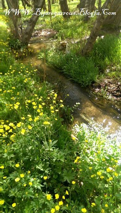 چشمه ای در تابستان