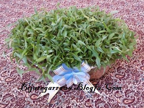 سبزه ماش - عکس از تختی